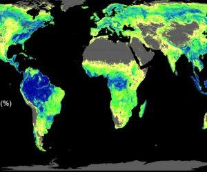 За първи път учените определиха колко дървета и къде трябва да се засадят, за да се справим с климатичната криза